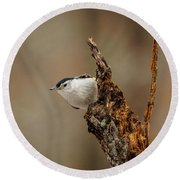 Nuthatch 2 Round Beach Towel