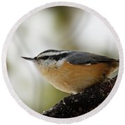 Round Beach Towel featuring the photograph Nuthatch  365-291 by Inge Riis McDonald