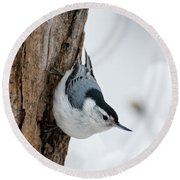 Nuthatch And Spring Snow - D010349 Round Beach Towel
