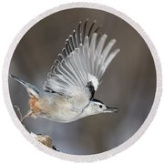 Round Beach Towel featuring the photograph Nuthatch In Action by Mircea Costina Photography