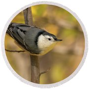 Nuthatch In Fall Round Beach Towel