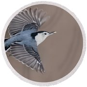 Round Beach Towel featuring the photograph Nuthatch In Flight by Mircea Costina Photography