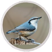Round Beach Towel featuring the photograph Nuthatch's Pose by Torbjorn Swenelius