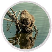 Round Beach Towel featuring the photograph Nutria On Stick-up by Robert Frederick