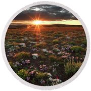 Round Beach Towel featuring the photograph Nuttalls Linanthastrum by Leland D Howard