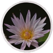 Nymphaea Pubescens Round Beach Towel
