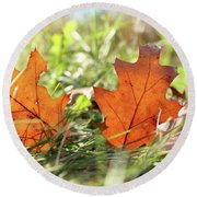 Oak Leaf In Autumn Round Beach Towel