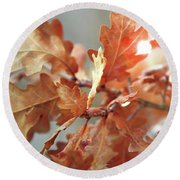 Oak Leaves In Autumn Round Beach Towel