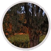 Oak Tree And Vineyards In Knight's Valley Round Beach Towel