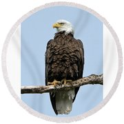 Observant Sentry Round Beach Towel