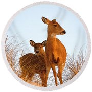 Ocean Deer Round Beach Towel by  Newwwman