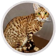 Ocicat Round Beach Towel by Marian Cates