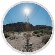 Ocotillo Glow Round Beach Towel