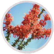 Ocotillo In Bloom Round Beach Towel