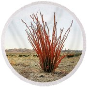 Ocotillo Plant Round Beach Towel