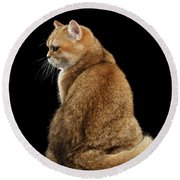 offended British cat Golden color Round Beach Towel
