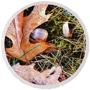Old Acorns And Leaves Round Beach Towel