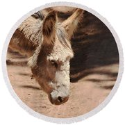 Round Beach Towel featuring the photograph Old Donkey by Debby Pueschel