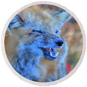 Round Beach Towel featuring the photograph Old Fox by Debbie Stahre