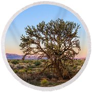 Old Growth Cholla Cactus View 2 Round Beach Towel