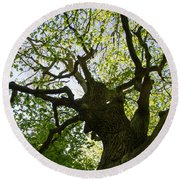 Old Oak Tree Round Beach Towel
