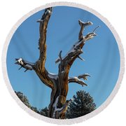 Old Tree - 9167 Round Beach Towel