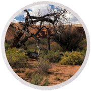 Old Tree In Capital Reef National Park Round Beach Towel