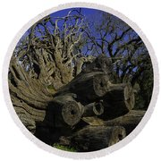 Old Tree Roots Round Beach Towel