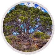 Old Utah Juniper Round Beach Towel