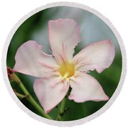 Oleander Agnes Campbell  Round Beach Towel