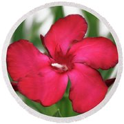 Oleander Blood-red Velvet 1 Round Beach Towel