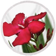 Oleander Blood-red Velvet 2 Round Beach Towel