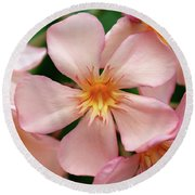 Round Beach Towel featuring the photograph Oleander Dr. Ragioneri 1 by Wilhelm Hufnagl