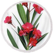 Round Beach Towel featuring the photograph Oleander Geant Des Batailles 2 by Wilhelm Hufnagl