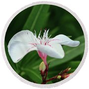 Oleander Harriet Newding  1 Round Beach Towel