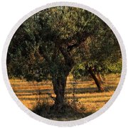 Olive Grove 3 Round Beach Towel