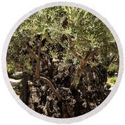 Round Beach Towel featuring the photograph Olive Tree by Mae Wertz