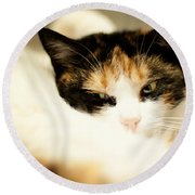 Round Beach Towel featuring the photograph On A Furry Pillow by Laura Melis
