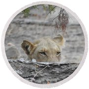 Round Beach Towel featuring the photograph On The Lookout by Betty-Anne McDonald