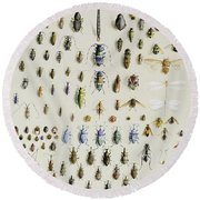 One Hundred And Fifty Insects, Dominated At The Top By A Large Dragonfly Round Beach Towel by Marian Ellis Rowan
