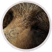 Round Beach Towel featuring the photograph One Who Sees - Grizzly Bear Art by Jordan Blackstone