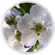 Round Beach Towel featuring the photograph Opening Act -  Cherry Blossoms by Angie Rea