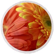 Orange And Yellow Daisies Round Beach Towel