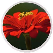 Round Beach Towel featuring the photograph Orange Aster-a Bee's Eye View by Onyonet  Photo Studios