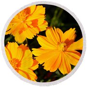 Round Beach Towel featuring the photograph Cosmos Trio by Sheila Brown