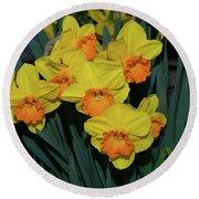 Orange-centered Daffodils Round Beach Towel