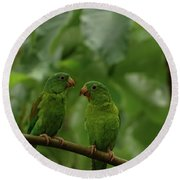 Orange-chinned Parakeets-  Round Beach Towel