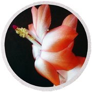 Orange Christmas Cactus Round Beach Towel