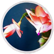 Orange Christmas Cactus II Round Beach Towel