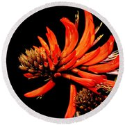 Round Beach Towel featuring the photograph Orange Clover II by Stephen Mitchell